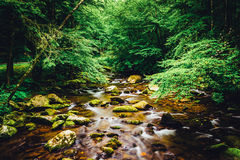 The Oconaluftee River, at Great Smoky Mountains National Park, N Stock Photography
