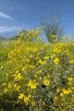 Ocotillo blossoms in springtime desert in Coyote Canyon, Anza-Borrego Desert State Park, near Anza Borrego Springs, CA stock photos