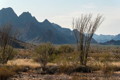 Ocotillo, Kofa National Wildlife Refuge. Ocotillo and the rugged mountain wilderness in the Sonoran Desert, Kofa National Wildlife Refuge stock images