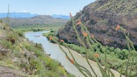 Ocotillo, Santa Elena Canyon, montañas de Chisos, curva grande Nationa Foto de archivo