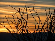 Ocotillo silhouette against an Arizona sunset. Stunning Arizona sunset is a backdrop for the Ocotillo in the Black Mountains royalty free stock photos