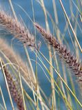 Ocsilación en el viento Foto de archivo libre de regalías