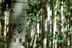 Oct 27 1933. Carving on Aspen tree on old wagon road marking an oct 27 1993 passing by ABC and EFC Royalty Free Stock Photos