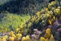 Woods in highland, Tibet, China stock photography