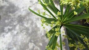 Octameria flower plant background stock photography