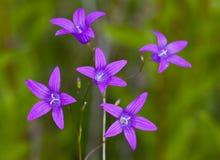 Octet de fleur photographie stock libre de droits