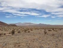 Octillo scaturisce deserto nella California Immagini Stock Libere da Diritti