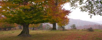 October 2. Colourful panoramic landscape of a beech glade on a cloudy day in october royalty free stock photo