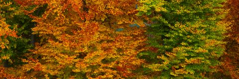 October 4. Colourful panoramic detail of a beech forest on a cloudy day in october royalty free stock photos