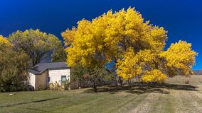 Autumn color and bright yellow tree in front of home south of Du. OCTOBER 8, 2017 - Autumn color and bright yellow tree in front of home south of Durango Stock Photos