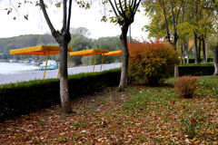 October in Calarasi city park. Colorful autumn trees in the large park of the town Calarasi Royalty Free Stock Images