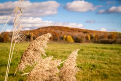 October in canada. Special colours, l`été indien Royalty Free Stock Photography