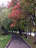 Autumn alley with red leaves stock photos