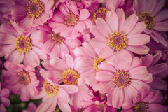 October Flowers 7. Spring Garden from Buenos Aires Stock Image