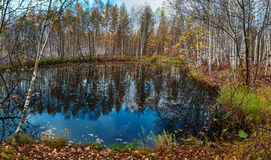 October in the forest on the lake. Stock Photography