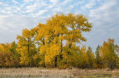 October. Golden Autumn Royalty Free Stock Photo