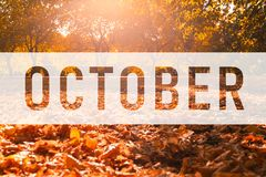 October, greeting text on colorful fall leaves royalty free illustration