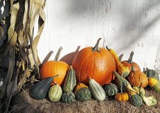 October harvest Royalty Free Stock Photos