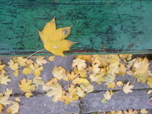 October leaf. A golden autumn leaf on the bench. October leaves in Poland Royalty Free Stock Photography