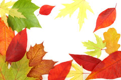 October leaves Royalty Free Stock Photo