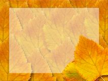 October leaves background Stock Photos