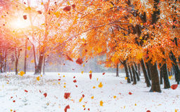 October mountain beech forest with first winter snow. Carpathian Royalty Free Stock Photography
