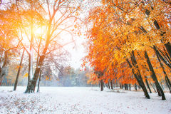 October mountain beech forest with first winter snow. Sunlight b Stock Image