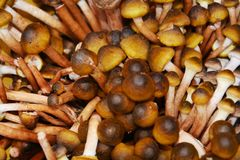 October mushrooms, background royalty free stock images