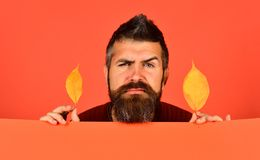 October and November time. Hipster with beard and confused face. October and November time idea. Hipster with beard and confused face plays with dry leaves stock photo