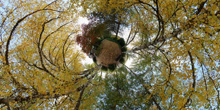 October planet with tree leafs Royalty Free Stock Photo