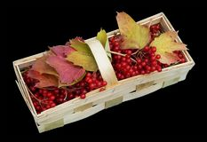 October red forest  wild berries and leaves lie  in simple rural Royalty Free Stock Photography