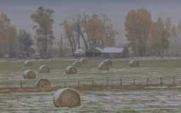 Autumn into Winter - fresh snow falls on autumn trees outside of. OCTOBER 9, 2017 - RIDGWAY COLORADO - Autumn into Winter - fresh snow falls on autumn trees and Royalty Free Stock Images