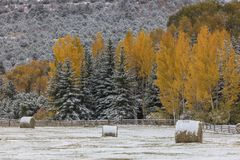 Autumn into Winter - fresh snow falls on autumn trees outside of. OCTOBER 9, 2017 - RIDGWAY COLORADO - Autumn into Winter - fresh snow falls on autumn trees Royalty Free Stock Images