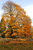 October's tree. Half naked tree and stone fence in autumn Royalty Free Stock Photography