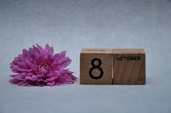 8 October on wooden blocks with a pink daisy. On a white background royalty free stock images