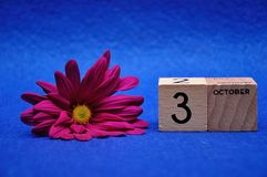 3 October on wooden blocks with a purple daisy. On a blue background stock photography