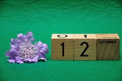 12 October on wooden blocks with a purple flower. On a green background stock photography