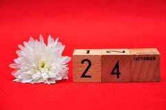 24 October on wooden blocks with a white daisy. On a red background royalty free stock photography