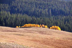 October in Yellowstone Royalty Free Stock Photography