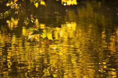 Octobre d'or Photographie stock