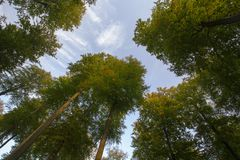 Octobre dans la forêt de Sonian Photos libres de droits