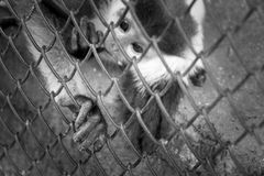 4 octobre, jour d'animal du monde Image libre de droits