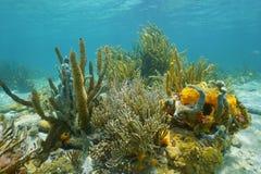 Octocorals et éponges colorées sur le fond de la mer Photographie stock