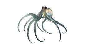 Octopod del mare profondo isolato illustrazione di stock