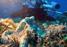 Octopus 110 Stock Afbeelding