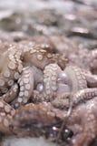Octopus Stock Afbeeldingen