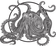Octopus Stock Image