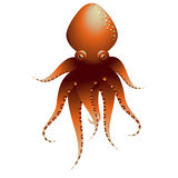 Octopus. Figure of octopus see to front Royalty Free Stock Image