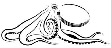 Octopus Stock Fotografie