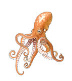 Octopus. The big octopus in depth of the ocean Stock Image